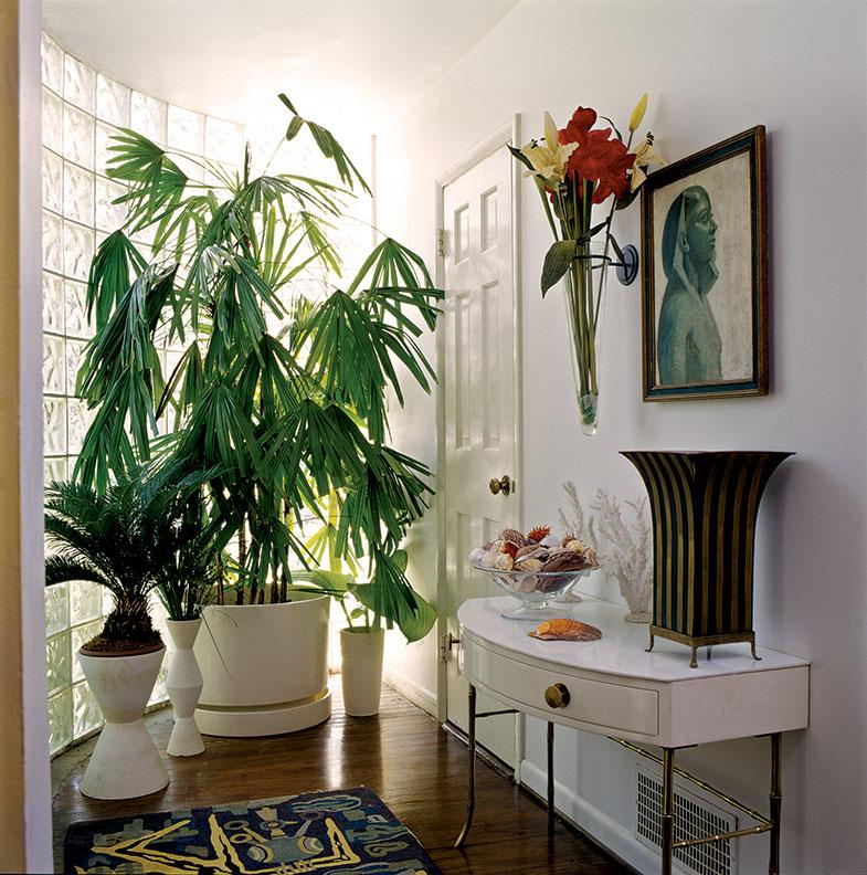 Mid Century Modern House Plants