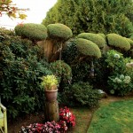 Little juniper shrubs grew slowly into majestic trees that Lillian has trimmed in pom-pom style.