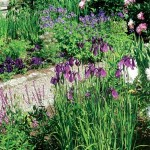 Irises are a strong complement in the June border; note the wooden trellis against the wall. (Photo: Judith B. Tankard)