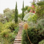 Meandering steps make the hillside, now cleared of invasive eucalyptus, accessible.