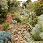 Bishop created a dry streambed using stones excavated when the patio was built.