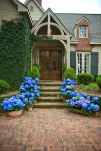 Glory Blue - Pictures of Hydrangeas in a Historic Garden