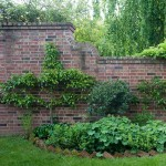 The wall around the herb garden supports two espaliered trees, an Asian pear and a 'Red Delicious' apple; they flank a sweet bay brought indoors in winter.