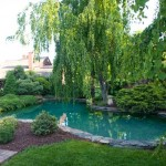 A weeping beech and a weeping katsura integrate the pool into the landscape; junipers and dwarf pines complete the scene.