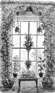 A common arrangement for a window garden featured a table in the center, hanging baskets, and vines trained to go around and over the window.