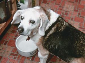 """Gypsy came complete with personal effects, such as her bowl inscribed """"Rugwrecker."""""""