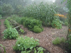 Mulches enable gardens to thrive by providing nutrients and protection, but they can add visual interest, too—such as the compost and wood chips seen in this lush landscape.