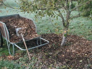 Trees look best when accompanied by rough-looking mulches, such as leaves, straw, pine needles, or the wood chips pictured.