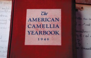 Detailed notes in the front and back pages of Helen Harman's 1940s American Camellia Yearbooks proved invaluable to the restoration efforts.