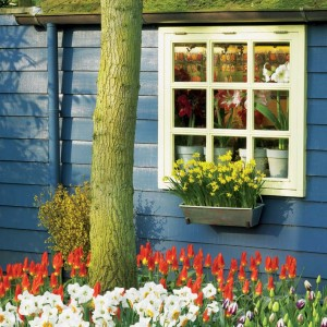 Planting bulbs outside your window or in a flower box will offer beautiful views when spring comes.