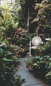 The lush environment of a shady city courtyard is enlivened by impatiens and both striped and variegated hosta.