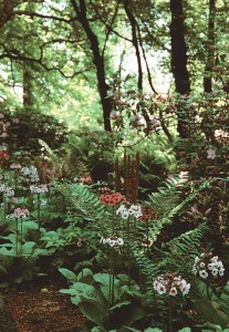 Primula and ferns grace a cool forest floor.