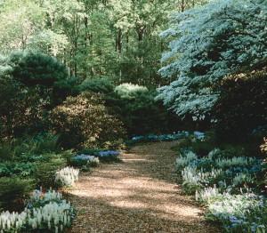 Blue iris, blue phlox, and foamflower edge a path leading into the woods.