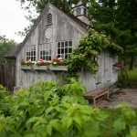 Raspberries grow close by a shed overlooking the vegetable garden.