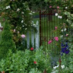 The iron gate is festooned in easy-care roses.