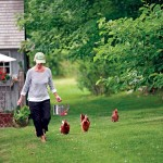 "Homeowner and gardener Diane Stoner started with ""designer chickens"" but found local birds outperformed them."