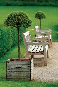 Potted topiaries add interest to a grouping of garden benches.
