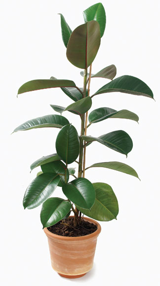 7 best houseplants for the kitchen old house online old house online - Good house plant ...