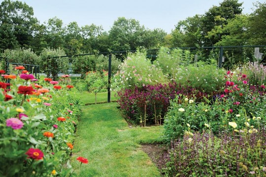 Adding an orchard to your garden old house online old house online - Spring trimming orchard trees healthy ...