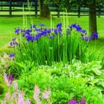 1 round garden flowers RCP_140703_5408_gn